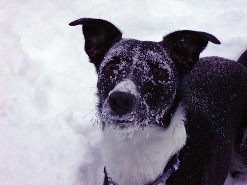 oscar_snow