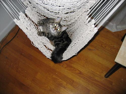 Leaper swinging in the hammock chair