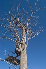 Tree & Telegraph Pole As One