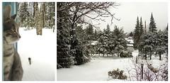 Jour-d'hiver