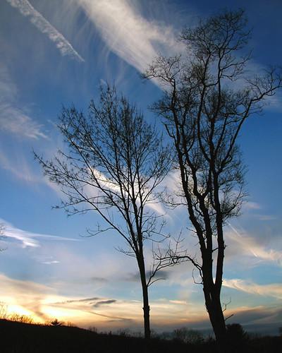 blue sunset sky cloud tree silhouette 1025fav landscape topv333 100v10f