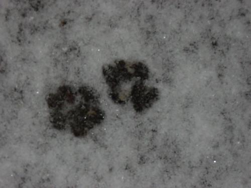 Cat footies in fresh snow