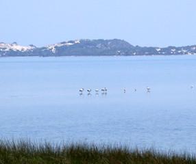 Birds on the Leschenault Estuary, Bunbury - Australind