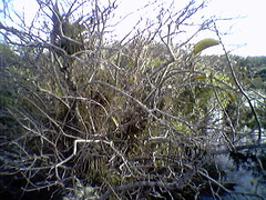 Epiphytes and moss