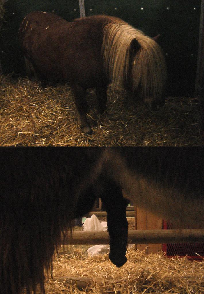 pony penis