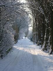 snowy tree path