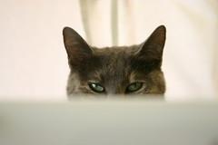 phae, sinister feline