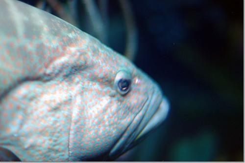 National Aquarium in Baltimore 06 photo by *istD