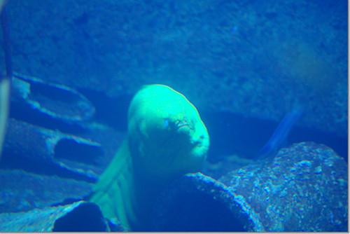 National Aquarium in Baltimore 07 photo by *istD