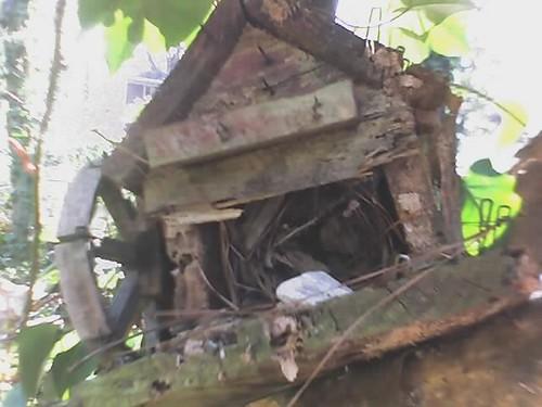 Birdhouse in my Backyard
