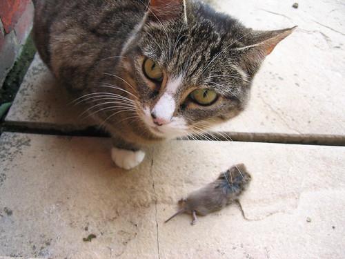 a cats kill