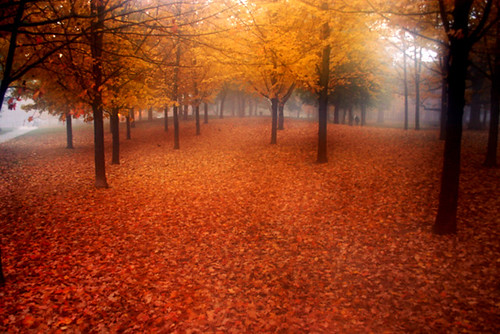 autumn trees toronto fall nature highpark deleteme10 4autumn