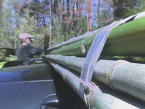 Loading bamboo poles