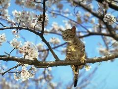cat_0038