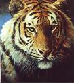 tigresiberiano