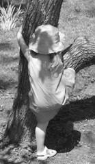 Savannah climbing the trees at Cave Hill