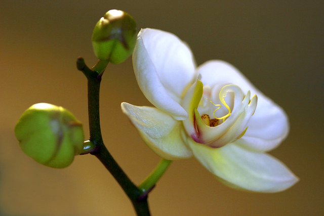 to fully bloom is a miracle
