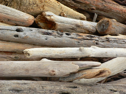 Driftwood | by thatmjs