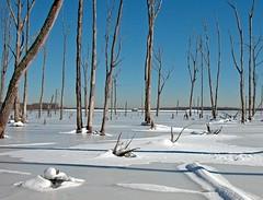Manasquan Reservoir With Snow | by Bob Jagendorf