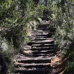 Viajefilos en Australia. Blue Mountains 069
