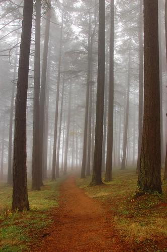 trees fog oregon forest portland path trail mttaborpark interestingness34 i500 explore04dec2009