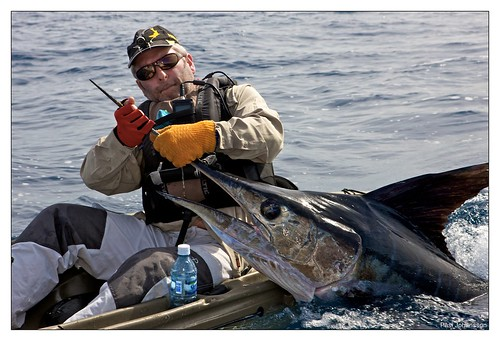 Marlin landed in a kayak (160 lb)