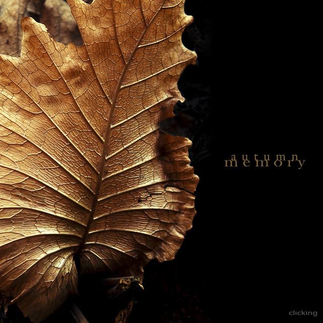 autumn memory - [ EXPLORED ]