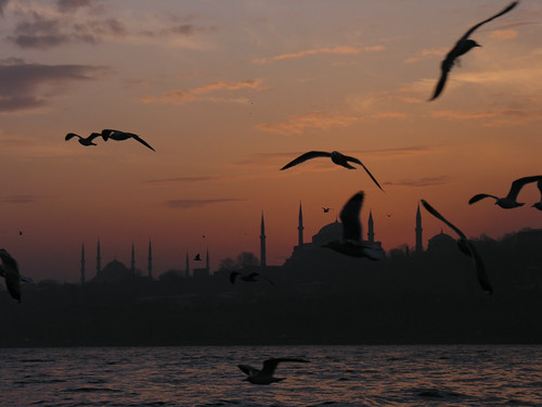 Seagulls in Istanbul | by CyberMacs
