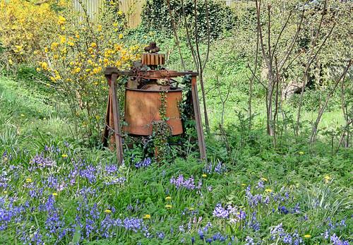 uk england bluebells garden unitedkingdom rusty whatisit chain alfriston dandelions rustyandcrusty thingamajig omot citrit larigan phamilton welcomeuk