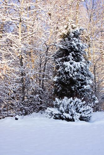 snow yard back nc waxhaw ghholt 2132010