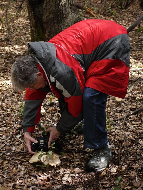 shooting fungi