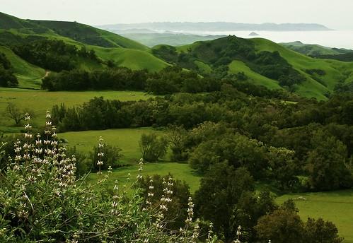 california green bird grass rock fog bay san view hills wharf embarcadero plug luis abalone volcanic morro sanctuary obispo