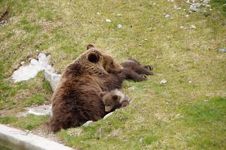 bear | by twicepix
