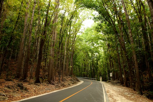 Man-Made Forest - Bohol | by R924