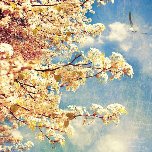 flowers sky tree bird spring seagull blooming