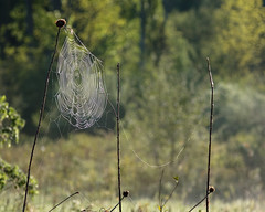Web in the Sun by no3rdw