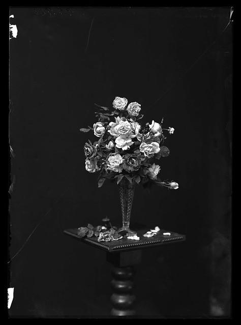 Portland roses in a vase