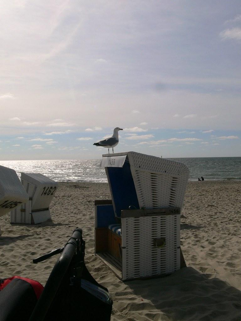 Möwe Auf Strandkorb Sommer In Hamburgde Wwwsommer In Hamburg