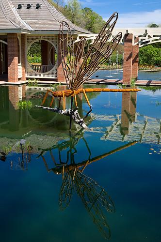 reflection huntsville dragonfly alabama botanicalgarden