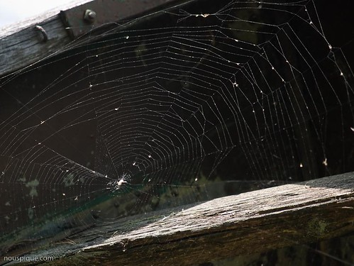Spider web in old boat