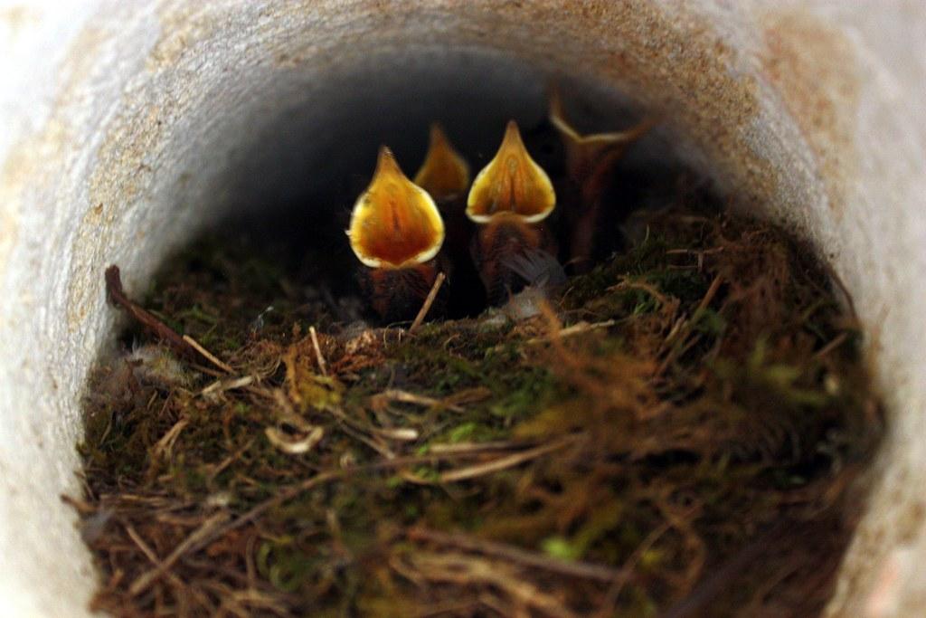 Nid d'oiseau / Bird nest