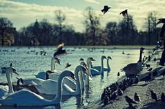 Feeding birds in Kensington Gardens   by The Wolf
