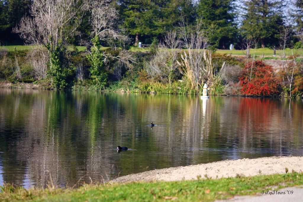 January 6th 6/366-1 (2010) . . . A walk around Lake Temescal by TulipFleurs