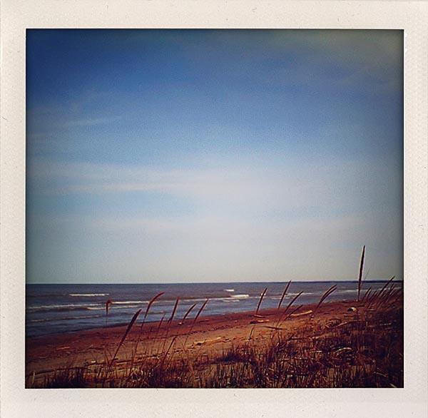 beach grass VQ1005