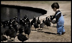 Captivated by Water Fowl | by Renee Silverman