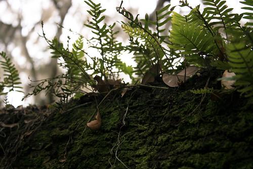 Got fern? | by smthng