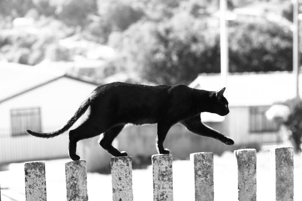 Keep walking | Catness, according to the Urban Dictionary