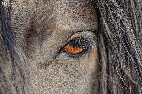 ohio horses eye face nikon mood sigma d90 hockingcollege