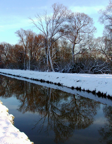 winter white snow cold tree nature river landscape natural bank gaywood reffley mygearandmepremium mygearandmebronze mygearandmesilver mygearandmegold