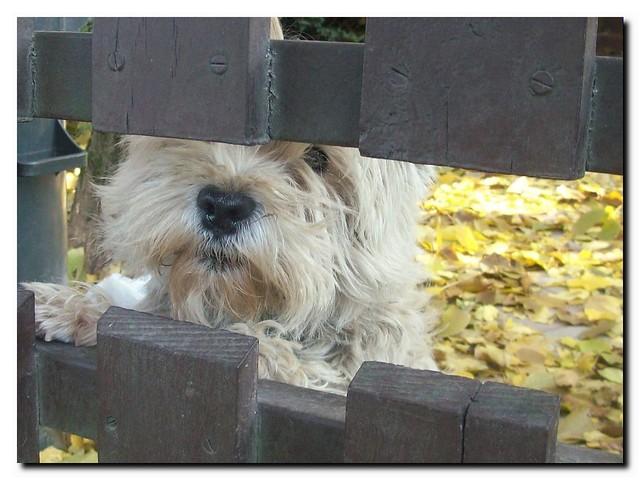 Heelo friend!I am a friendly dog!Barátságos kutyus.